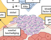 Antistolling tijdens cardiopulmonale bypass
