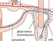 Intrathecaal morfine als postoperatieve pijnbestrijding bij laparoscopische operaties