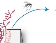 Ernstige malaria tropica op een Nederlandse IC