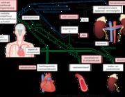Acute behandeling van verhoogde bloeddruk op intensive care